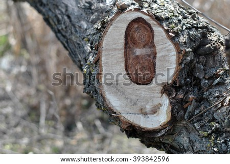 Tree trunk with a fresh pruning cut