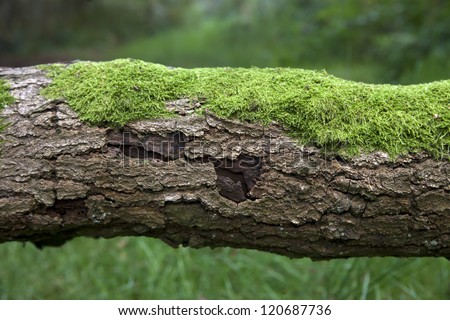 tree trunk with moss - stock photo