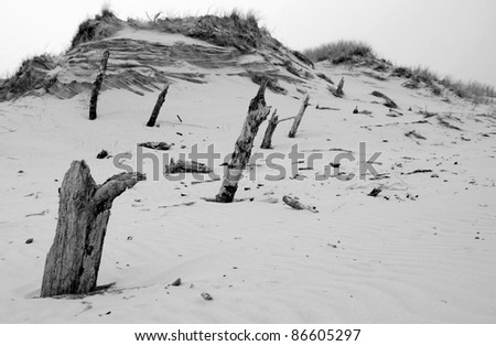 Tree trunks destroyed by sand - stock photo