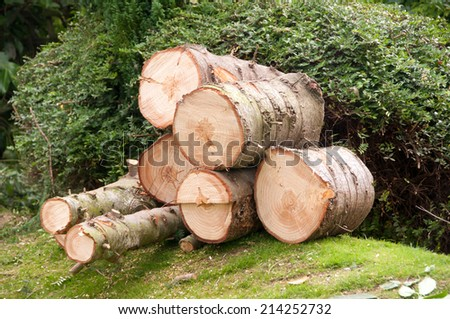 Tree trunks felled and stacked - stock photo