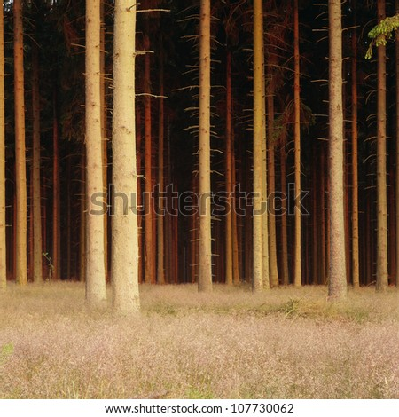 Tree trunks in forest - stock photo