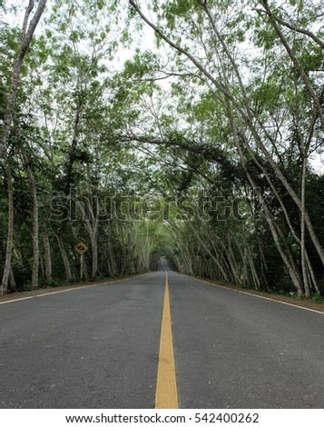 Tree tunnel road in forest Ban Krang Kaeng Krachan National Park Thailand