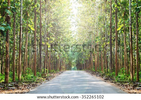 Tree tunnel with lens flare effect - stock photo