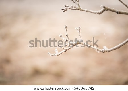 Tree twig with rime. Soothing colors and tones abstract photo of winter tree branch.