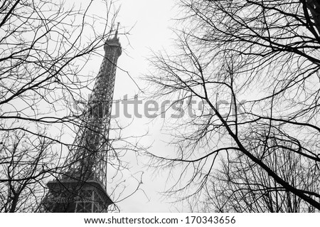 Tree twigs and Eiffel tower at background. Black and white. - stock photo