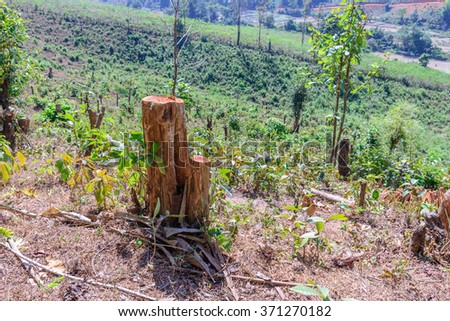 Tree were cut, deforestation damage global change. - stock photo