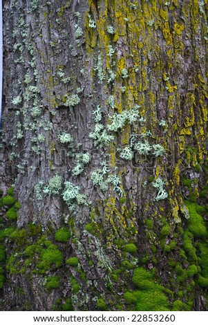 tree which is covered with moss - stock photo