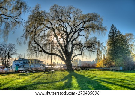 Tree with a silhouette and shadows and sunrise  - stock photo