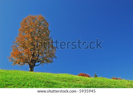 Tree with beautiful fall colors on top of a hill - stock photo