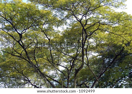tree with branches and leaves - stock photo