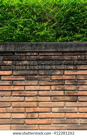 Tree with brick wall background