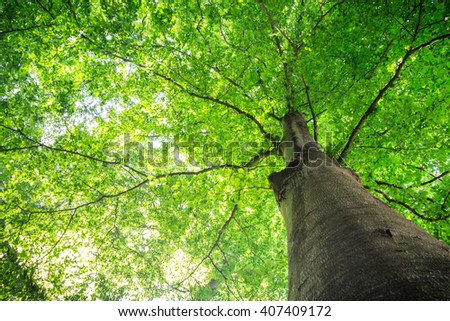 Tree with green leaves.  - stock photo