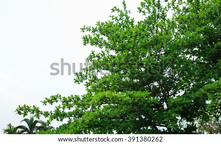 Tree with isolated background