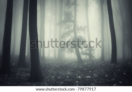 tree with leafs in a spotlight in a misty forest with white leafs covering the ground - stock photo