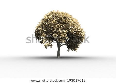 Tree with lots of leaves growing on white background