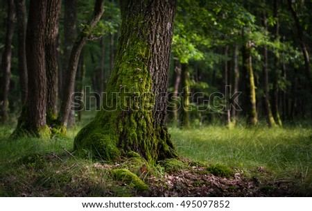 tree with mushrooms, green forrest in summer light