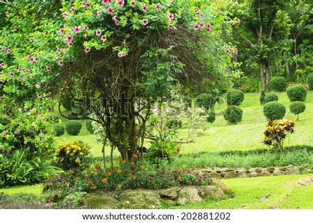 Tree with pink flowers in botanical garden landmark (Queen Sirikit park, Chiang Mai, Thailand) - stock photo