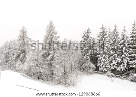 tree with snow in winter time