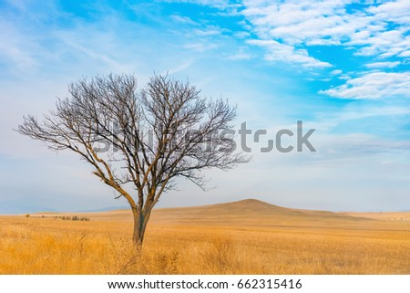 Tree without leaves in a yellow field