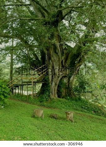 Treehouse - stock photo