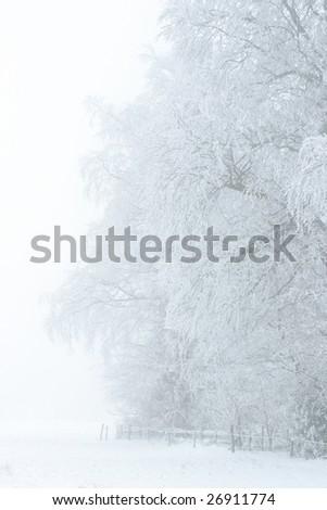 Treeline covered with snow - stock photo