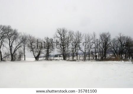 treeline in wintertime - stock photo