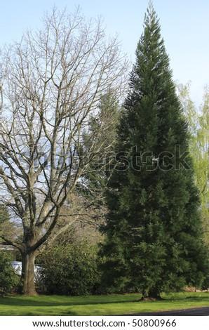 Trees. - stock photo