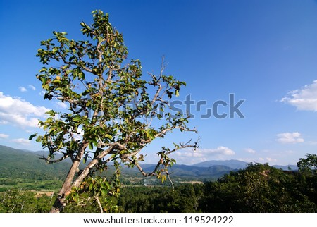 Trees against the sky. - stock photo