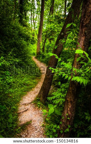 Trees along a trail through lush green forest in Codorus State Park, Pennsylvania. - stock photo