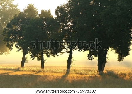 Trees alongside the country road on the edge of a field of grain. Photo taken at dawn. - stock photo