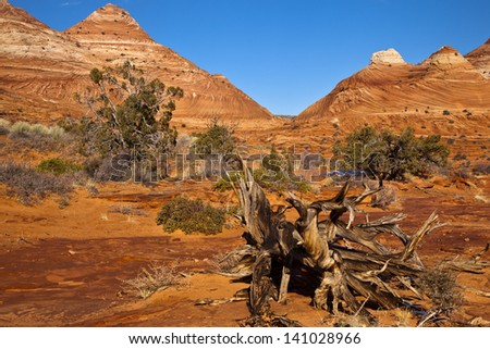 Trees among the red rocks in the Paria wilderness of Utah - stock photo