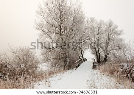 Trees and a small wooden bridge. It is very early in the morning and it freezes very much in the Netherlands. The morning mist still hangs over the landscape. The view is limited and less colorful.