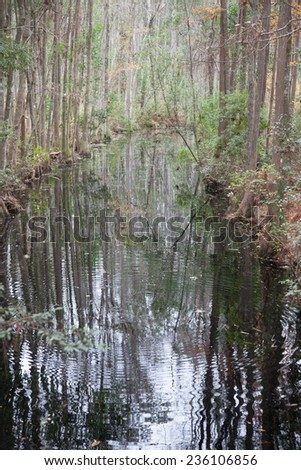 Trees and bushes reflected in swamp water in the Okefenokee swamp of Southeast Georgia, USA.
