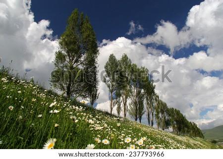 trees and daisy flowers - stock photo