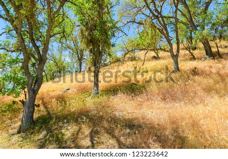 trees and grassland in Pinnacles National Park