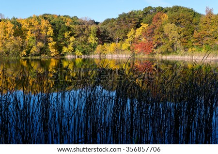 trees and pond of marthaler park during peak autumn season at daybreak with reflections on water in west saint paul minnesota - stock photo