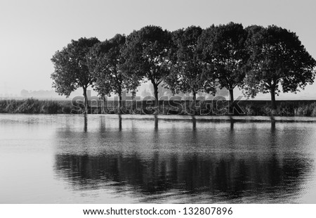 Trees and their reflections in a Dutch rural landscape in monochrome tones. - stock photo