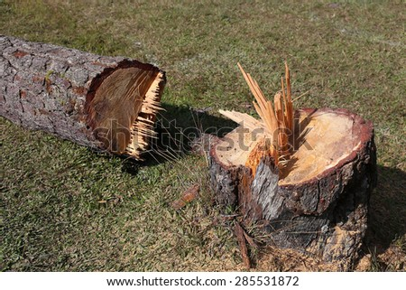 Trees are cut - stock photo