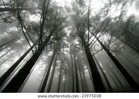 trees at a foggy scenery - stock photo