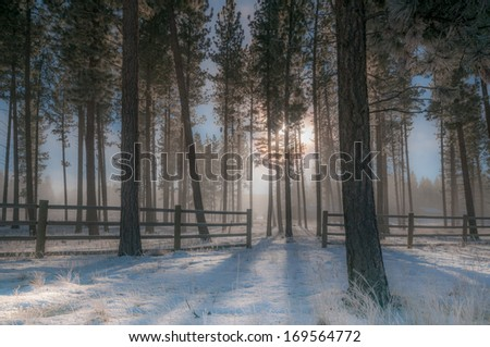 Trees at dawn in mist, winter - stock photo