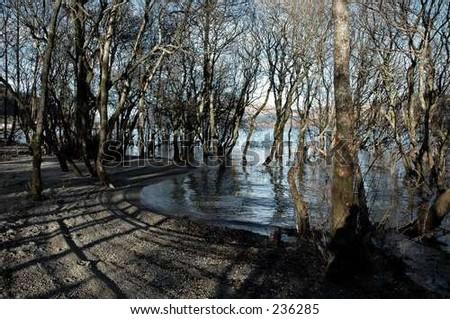 trees at sea - stock photo