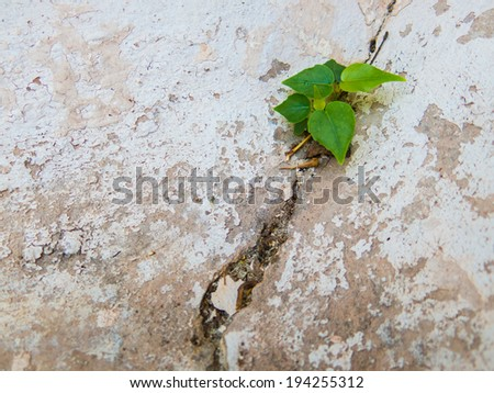Trees based on the split would cement floor. - stock photo