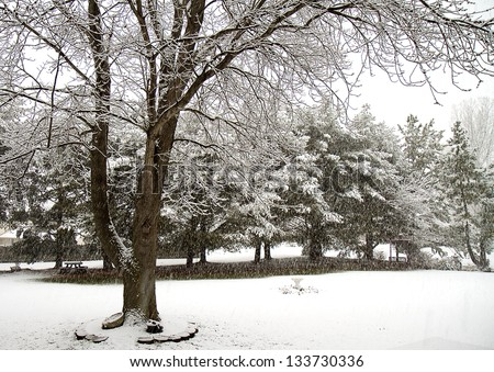 Trees being covered in snow during the midst of a snow blizzard - stock photo