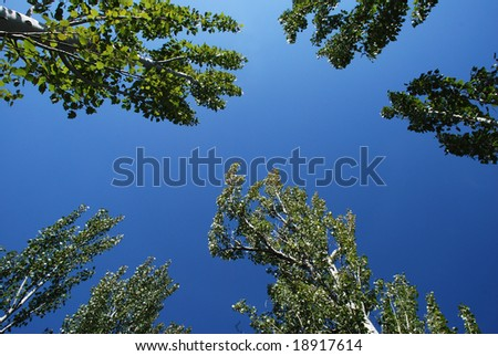 trees blue sky perspective view - stock photo
