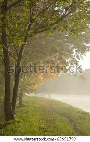 Trees by the river on a foggy morning - stock photo