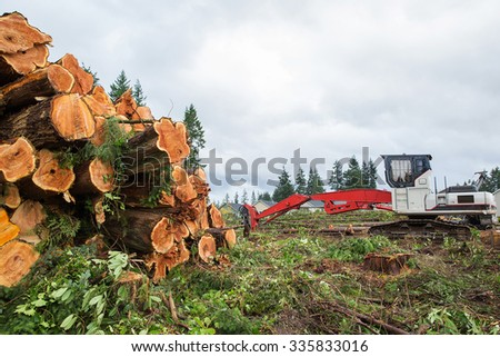 Trees chopped and stacked - stock photo