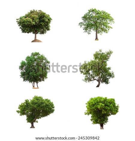 Trees Collection isolated on white background - stock photo