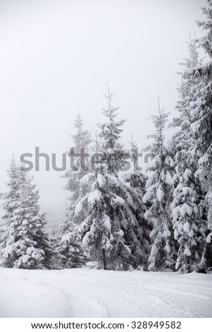 Trees covered with hoarfrost and snow in mountains - Christmas background