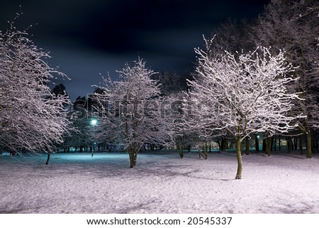 Trees covered with snow and dark blue sky. Park scene. Night shot.