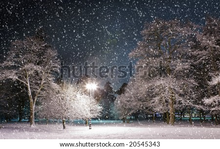 Trees covered with snow, dark sky and shining lantern through snowing. Park scene. Night shot.